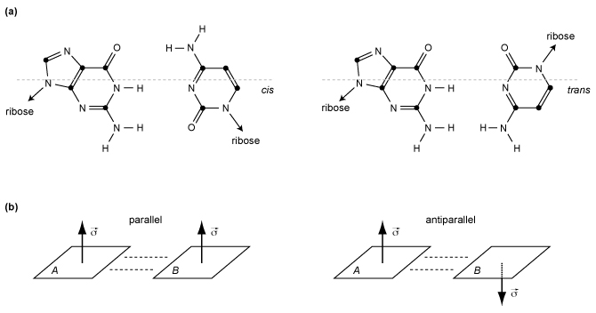 Figure 2: Other base pairing annotations. (a) The cis/trans relative orientation of glycosidic bonds. (b) The parallel/antiparallel relative orientation of the bases' plane.
